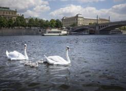Prague-Castle-River-Boat-Tour-13