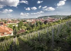 Prague-Castle-River-Boat-Tour-29